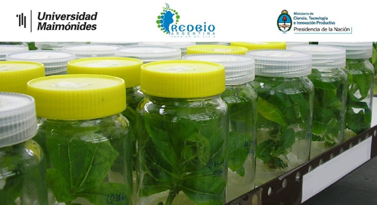 Curso de extensión Propagación de plantas in vitro